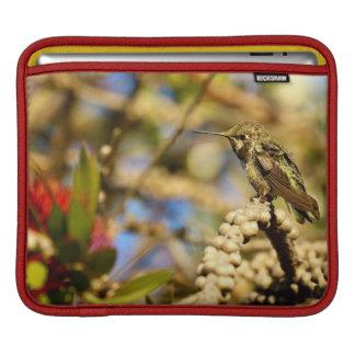 Le colibri d'Anna féminine, la Californie, photo Housses iPad