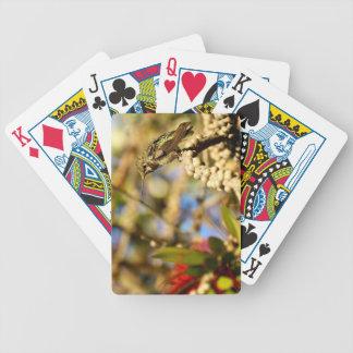 Le colibri d'Anna féminine, la Californie, photo Jeux De 52 Cartes
