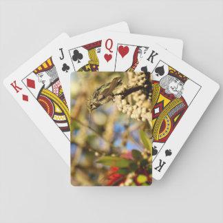 Le colibri d'Anna féminine, la Californie, photo Jeux De Cartes Poker