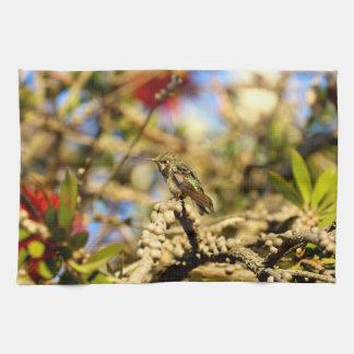 Le colibri d'Anna féminine, la Californie, photo Linges De Cuisine