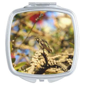 Le colibri d'Anna féminine, la Californie, photo Miroirs De Voyage