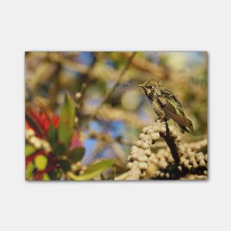 Le colibri d'Anna féminine, la Californie, photo Notes Autocollantes