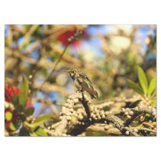 Le colibri d'Anna féminine, la Californie, photo Papier Mousseline 43,18 Cm X 58,42 Cm
