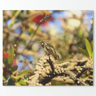 Le colibri d'Anna féminine, la Californie, photo Papiers Cadeaux