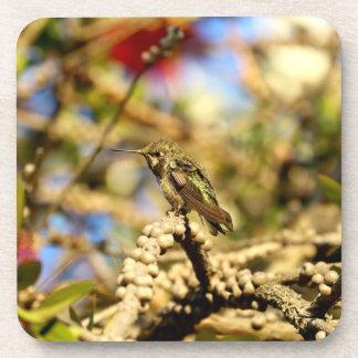 Le colibri d'Anna féminine, la Californie, photo Sous-bock