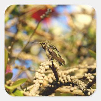 Le colibri d'Anna féminine, la Californie, photo Sticker Carré