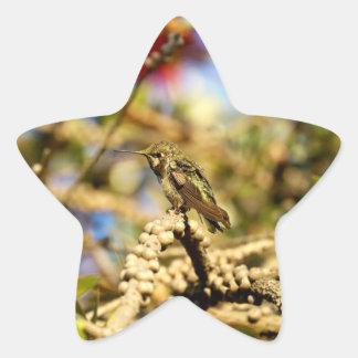Le colibri d'Anna féminine, la Californie, photo Sticker Étoile