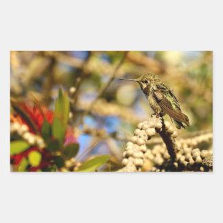 Le colibri d'Anna féminine, la Californie, photo Sticker Rectangulaire