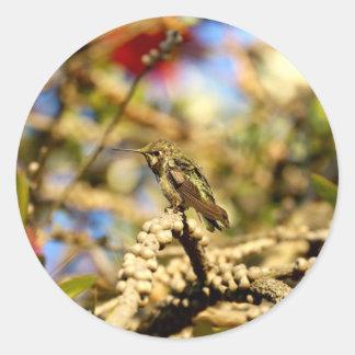 Le colibri d'Anna féminine, la Californie, photo Sticker Rond