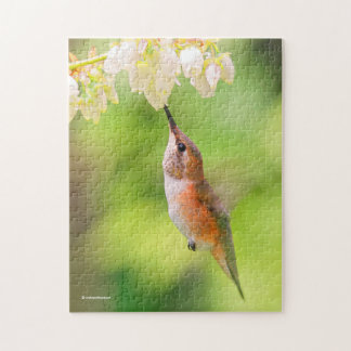 Le colibri Rufous sirote le nectar de fleur de Puzzle