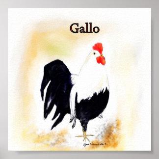 Le coq italien Gallo Affiches