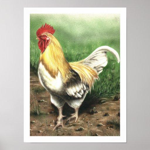 Le coq posters