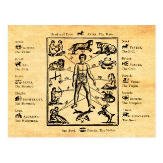 Le corps, comme régi par les douze constellations carte postale