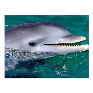le dauphin carte postale