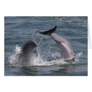 Le dauphin sautent ! carte de vœux