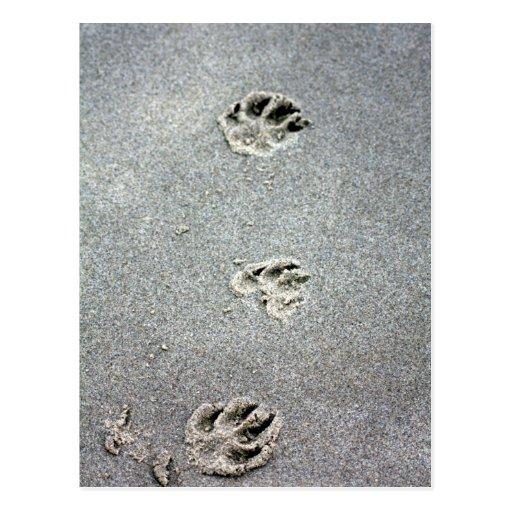 Le Dog paws dans the sand Carte Postale