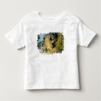 le faucon rouge-épaulé, lineatus de Buteo, se T-shirt Pour Les Tous Petits