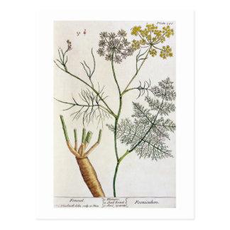 """Le fenouil, plaquent 288 """"d'un de fines herbes carte postale"""