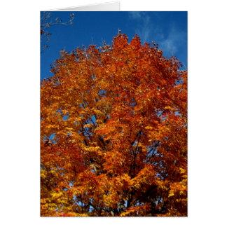 Le feu de dessus d'arbre de Blank_Orange Cartes De Vœux