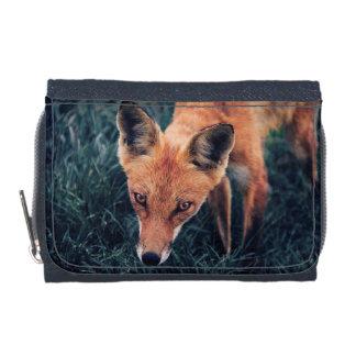 Le Fox rouge