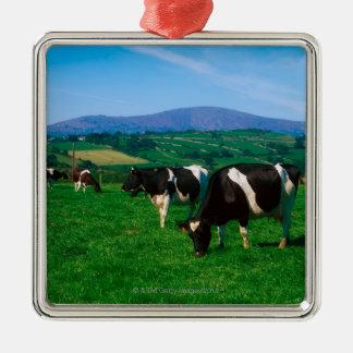 Le frison du Holstein effraye près de Borris, Ornement Carré Argenté