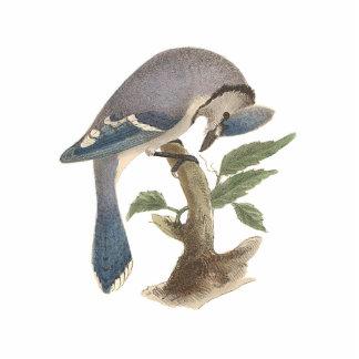 Le geai bleu(cristatus de Garrulus) Magnet Photo Sculpture