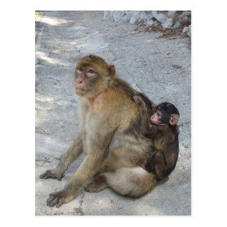 Le Gibraltar Monkeys la carte postale,