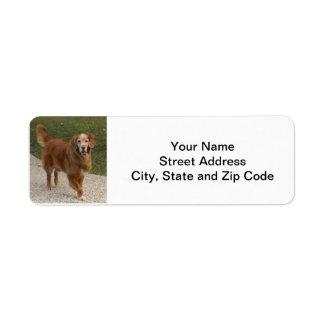 Le golden retriever renvoient l'étiquette de adres étiquette d'adresse retour
