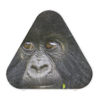 Le gorille de montagne juvénile alimente sur le haut-parleur bluetooth