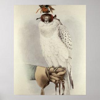 Le Groenlandais, Faucon Blanc Mue, du 'Traite De Posters