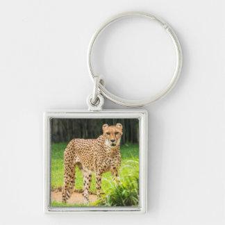 Le guépard marche le long d'un chemin porte-clé carré argenté