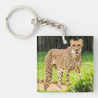 Le guépard marche le long d'un chemin porte-clé carré en acrylique double face