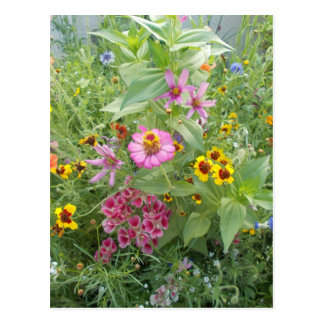Le jardin fleurit comme marguerite, zinnia, pavot, carte postale