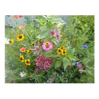 Le jardin fleurit comme marguerite, zinnia, pavot, cartes postales