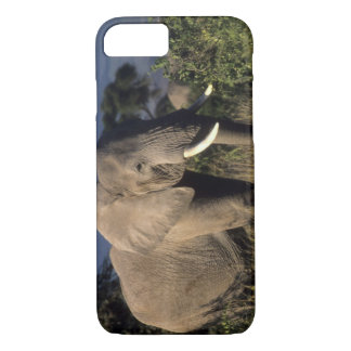 Le Kenya : Amboseli, éléphant africain masculin Coque iPhone 8/7