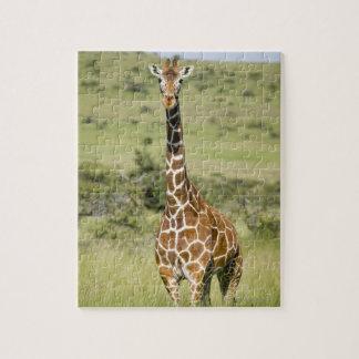 Le Kenya, garde de Lewa, position de girafe de Puzzle