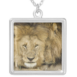 Le Kenya, masai Mara. Deux lions reposant le Pendentif Carré