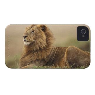 Le Kenya, masai Mara. Lion de mâle adulte sur le Coque iPhone 4
