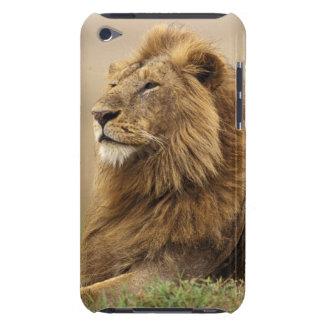Le Kenya, masai Mara. Lion de mâle adulte sur le Coque iPod Touch