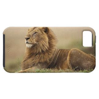 Le Kenya, masai Mara. Lion de mâle adulte sur le Coques iPhone 5