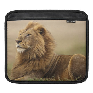 Le Kenya, masai Mara. Lion de mâle adulte sur le Poches iPad