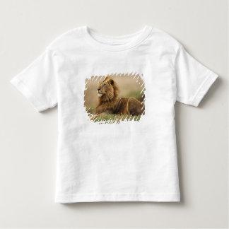 Le Kenya, masai Mara. Lion de mâle adulte sur le T-shirt Pour Les Tous Petits