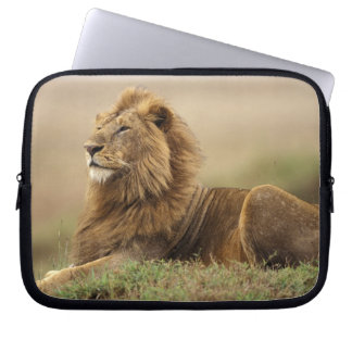 Le Kenya, masai Mara. Lion de mâle adulte sur le t Trousse Ordinateur