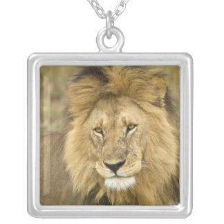 Le Kenya, masai Mara. Plan rapproché de lion. Pendentif Carré