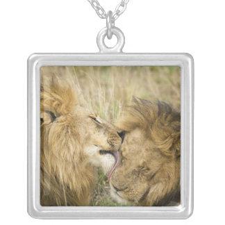 Le Kenya, masai Mara. Plan rapproché d'un lion Pendentif Carré