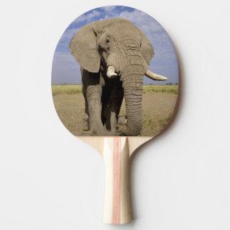 Le Kenya : Parc national d'Amboseli, éléphant Raquette De Ping Pong