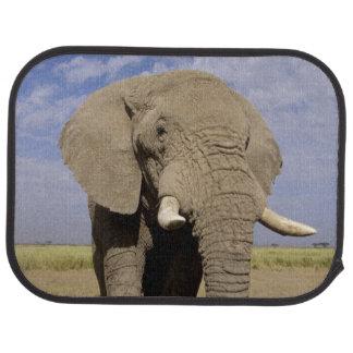 Le Kenya : Parc national d'Amboseli, éléphant Tapis De Voiture