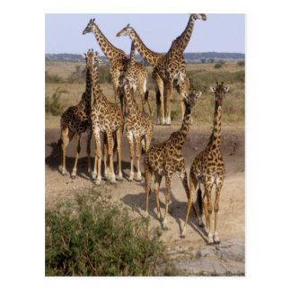 Le Kenya : Troupeau de réservation de jeu de Mara Cartes Postales