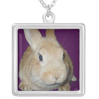 Le lapin d'or vous voit ! pendentif carré