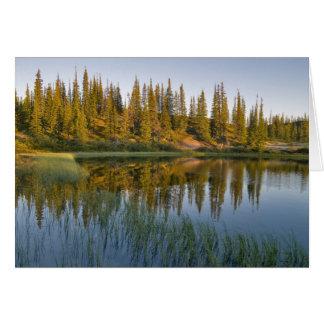 Le lever de soleil illumine des arbres sur un carte de vœux